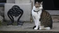 Kater Larry darf in der Downing Street bleiben