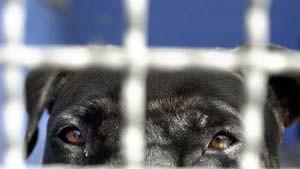 Geschmuggelte Hunde  im Frankfurter Tierheim