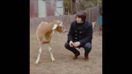 Interview mit Brian Wilson über das 50. Jubiläum von Pet Sounds