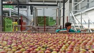 Russland kontert mit Importstopp