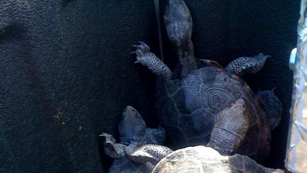 Schildkröten sorgen für Flugverspätungen in New York