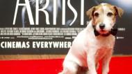 """Berühmter Filmhund """"Uggie"""" eingeschläfert"""