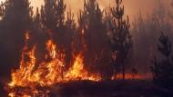 Heftige Waldbrände haben Chile im Griff.