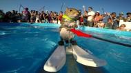 Ein Eichhörnchen, das Wasserski fährt