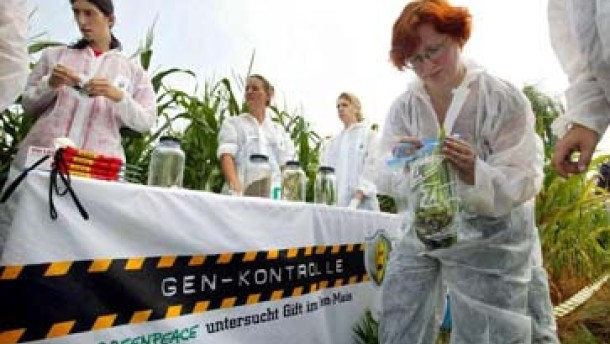 Kaum Interesse an Gen-Pflanzen