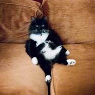 Warum das Haus verlassen, wenn die Katze auf mich wartet?