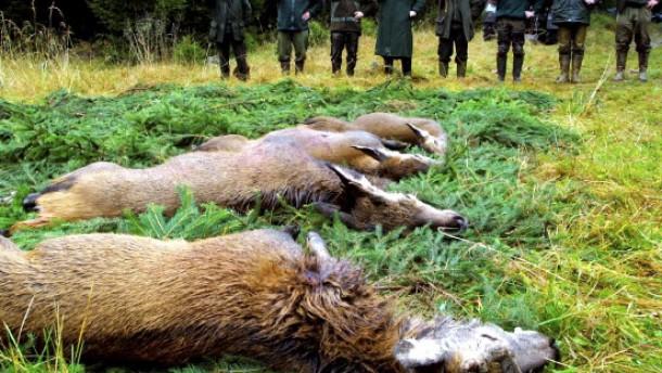 Jäger sollen mehr Hirsche schießen