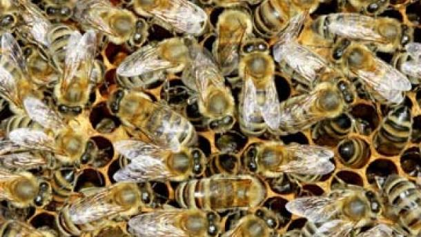 tiere selbst bienen wollen schlafen natur faz. Black Bedroom Furniture Sets. Home Design Ideas