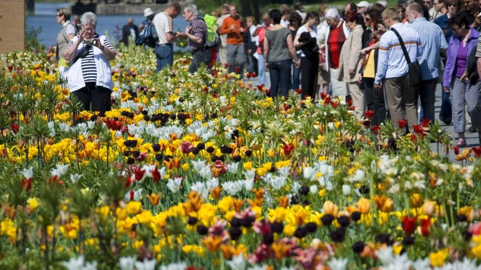 Eine Million Pflanzen an der Havel