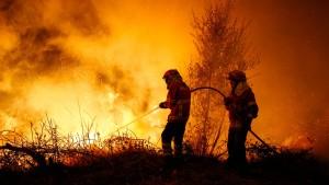 Mindestens 39 Tote bei Waldbränden in Portugal und Spanien