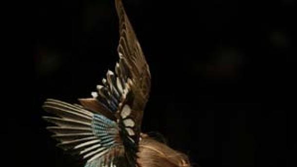 Mode in Zeiten der Vogelgrippe