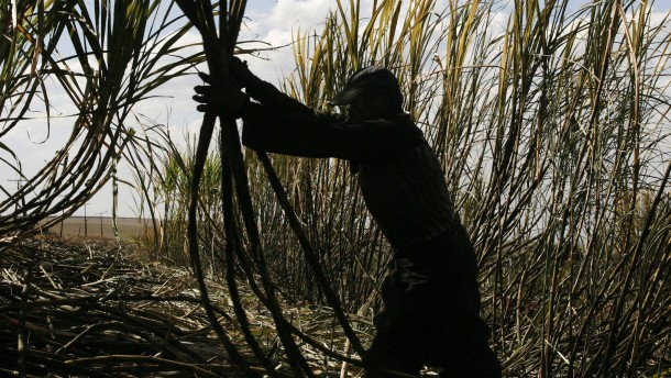 Zuckerrohranbau in Brasilien: Die dunkle Seite des Zuckers