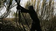 Multimedia-Reportage über die Abgründe des Zuckerrohranbaus in Brasilien