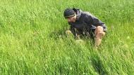 Nilsläuft grast während einer veganen Pause.
