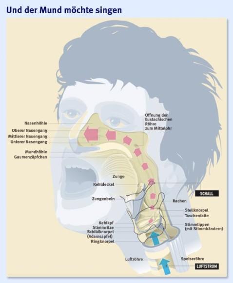 Bilderstrecke zu: Stimmphysiologie: Singen können - Bild 2 von 3 - FAZ